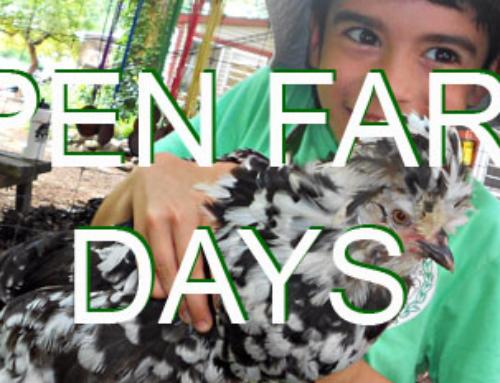 Open Farm Days are underway!