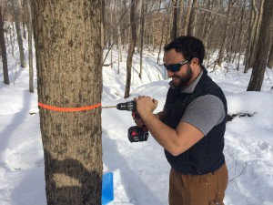 Kyle Siriano taps a maple tree in the forest behind Common Ground's school building.