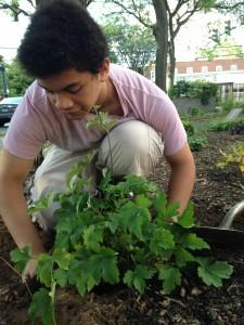 Planting at Lenzi Park
