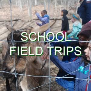 04-SchoolFieldTrips