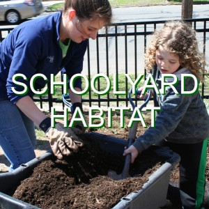 08-SchoolyardHabitat