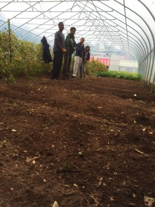 The fall farm crew prepares the ground in the high tunnel on our farm.