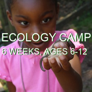 "A young girl holds up and worm as she examines it. The words ""Ecology camp, 6 weeks, ages 6-12"" are written across the image."