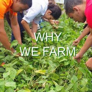 "A group of Common Ground students and a teacher work on the farm during the ecologia class. The words ""Why We Farm"" are written across the image."