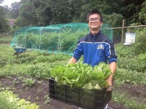 Loc Harvest