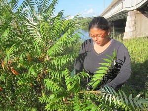 Kathiana removes invasive plants at Dover Beach, another Urban Oasis site at which she and other Common Ground students worked.