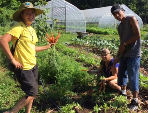 FILLED-Now Accepting Applications for our Urban Farming Internship, 2017 Season