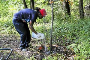 Eugenio Garcia, a rising senior at Common Ground High School, waters a tree planted last year in the urban oasis in Edgewood Park. Garcia and other summer interns will work to maintain the oasis this summer. (Anna Bisaro - New Haven Register)