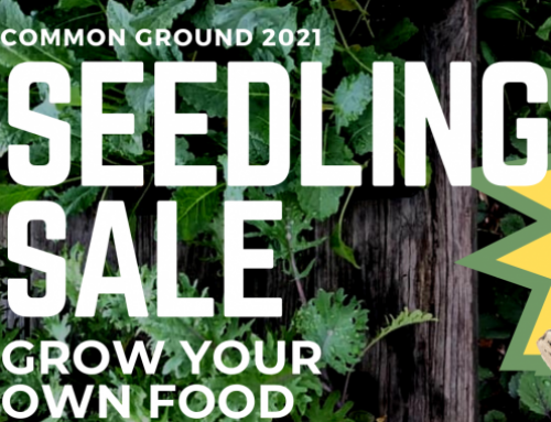 Join Us for the Annual Common Ground Seedling Sale- Spring 2021!